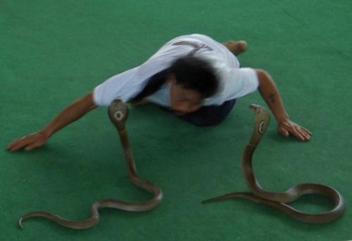 Змеи кстати реальные