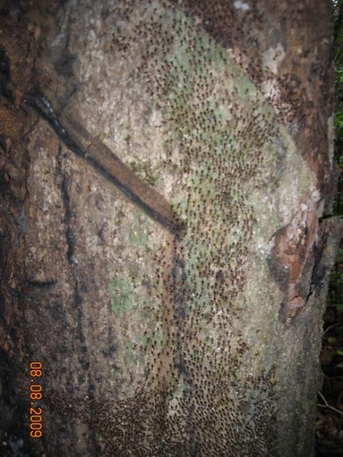 муравьиный путь