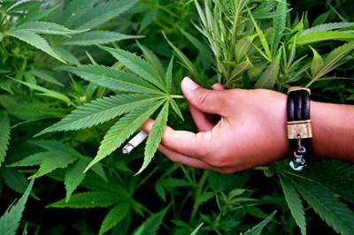 священное растение Шивы