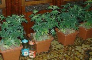 и в горшках оно тоже растет )))