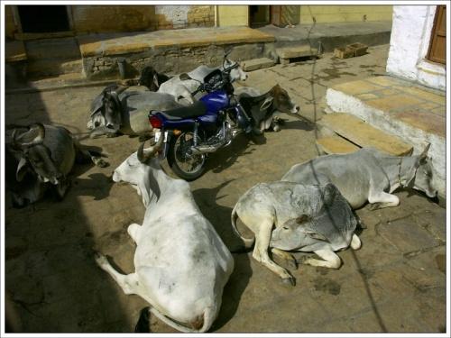 Транспорт Индии. Джайсалмер