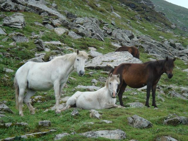 Улыбающиеся лошадки