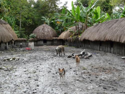 Типичная деревня. В центре мужской дом, вокруг женские дома и кухня, с краю - свинарник, вокруг - огороды