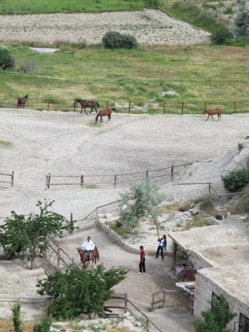 страна прекрасных лошадей