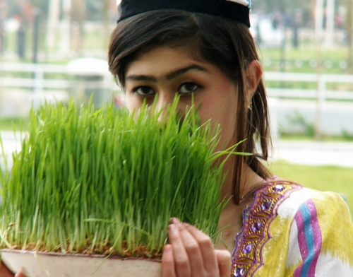 пророщенная пшеница - символ Навруза, главного весеннего праздника