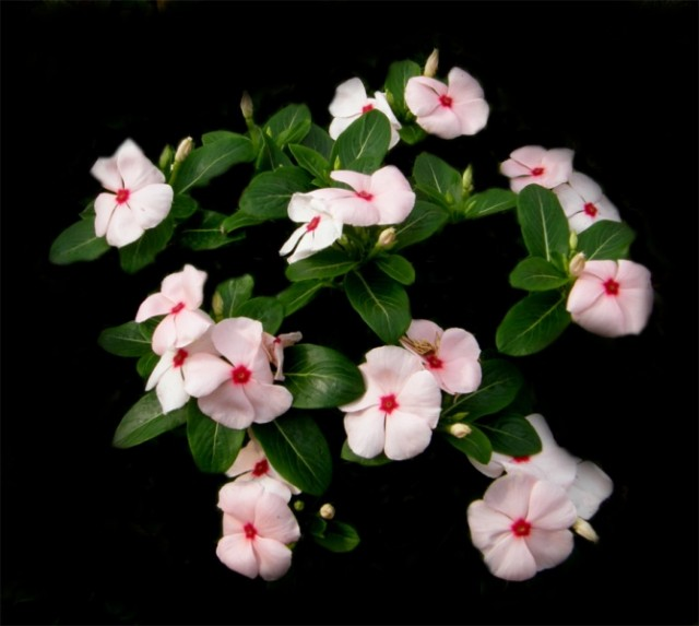 Цветы Индии. :)