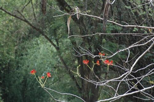 цветы индии