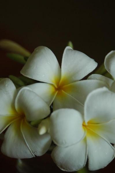 Индийские картинки цветы