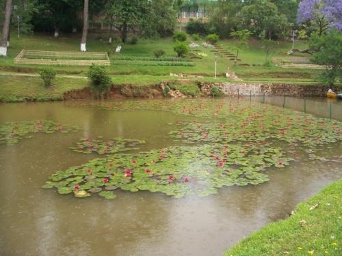 лотосы на озере Вард, Шиллонг