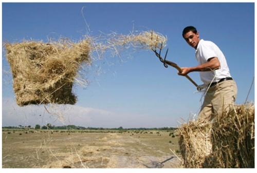 Сельский рабочий в Камарге. Он взял нас посмотреть, как кормят быков. Я делал снимки всего, что двигалось. Он не обратил никакого внимания на меня, когда я его сфотографировал. (EOS-10D с Tokina 17/3.5.)