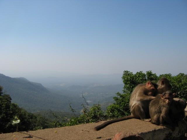 У водопада полно обезьян