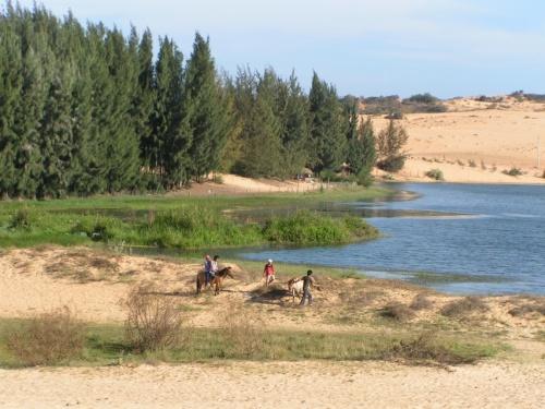 озеро лотосов, песчаные дюны и ели