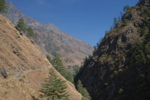 затем дорога идет по хвойному лесу (вдоль ущелья)