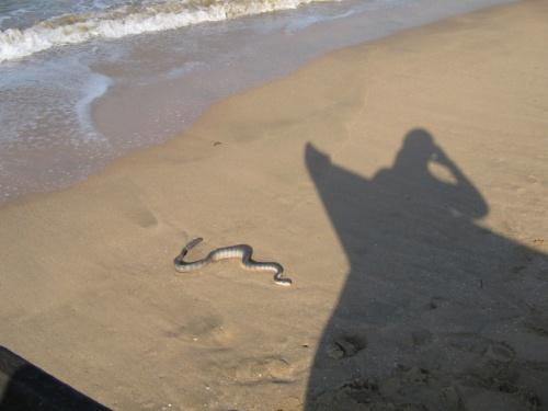 snake on the beach)