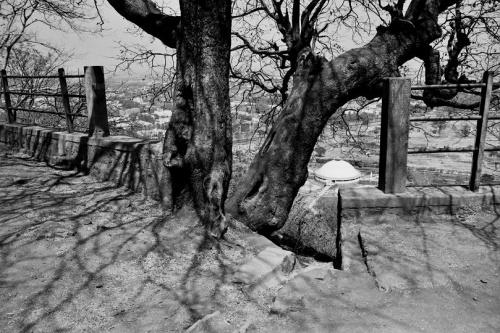 камасутра на орбите.в дереве