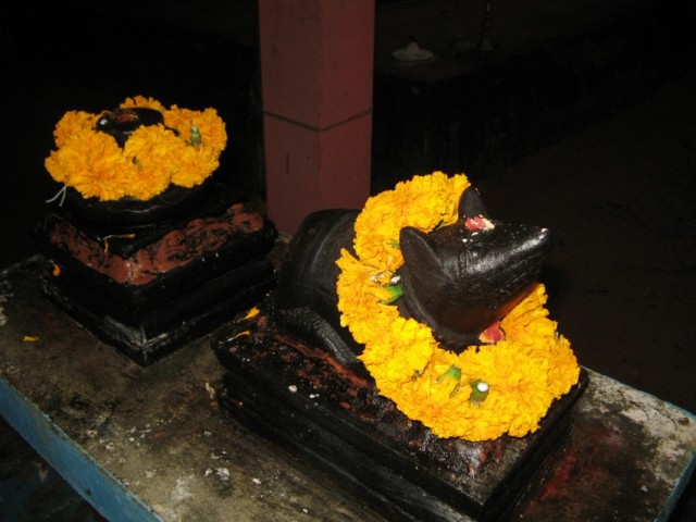 Святая Мышь в местном храме Ганеша