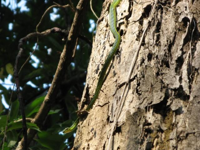 Ядовитая змея в джунглях