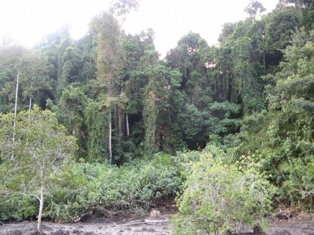 Вот тут, слева, где чуток примяты нижние кусты я вышел из джунглей