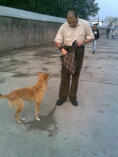 муж любит подкормить бездомных собачек