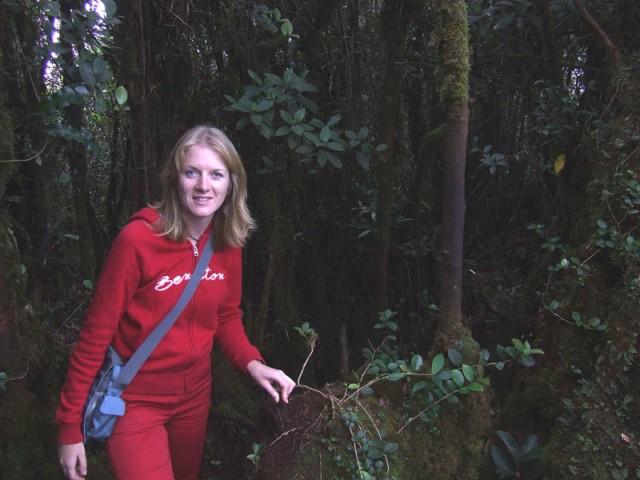 То, что называют rainforest