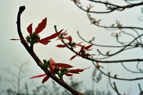 цветы для марьи иванны
