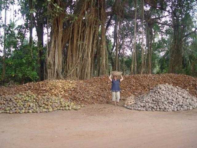 пешеходная прогулка по деревне Беталбатим-Колва, кокосовые гурты