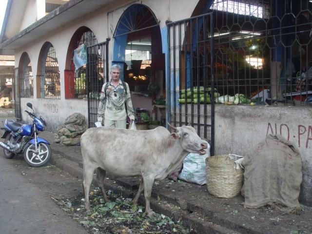 мусор..коровы..все очень по Индийски