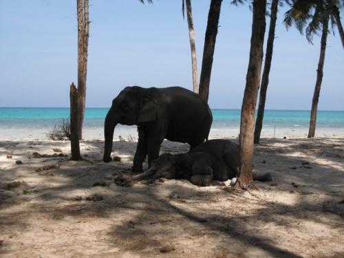 Слоны устали