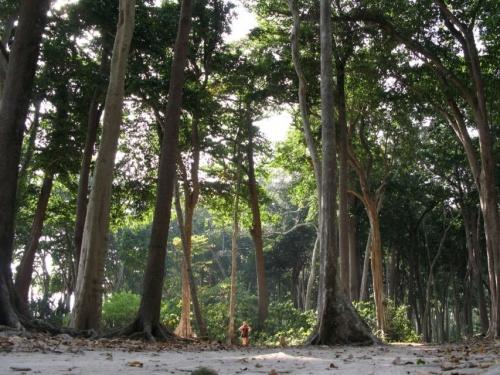 Лес на пляже №7
