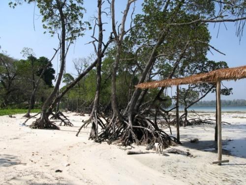 Шагающие деревья на пляже №3.