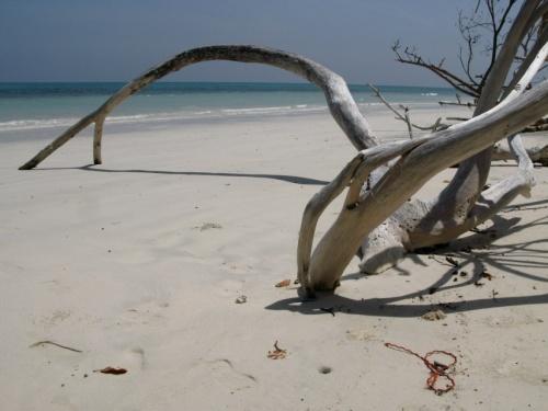 Пляжные коряги