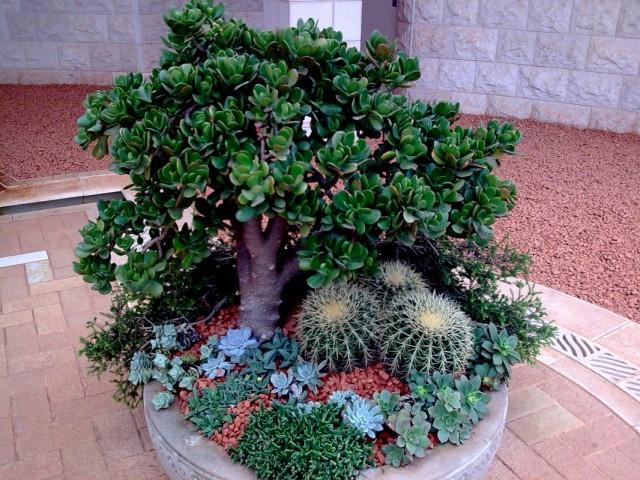 Израиль. В Бахайском  саду.