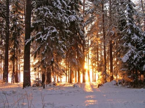 """Пожар в лесу"". Температура -30"