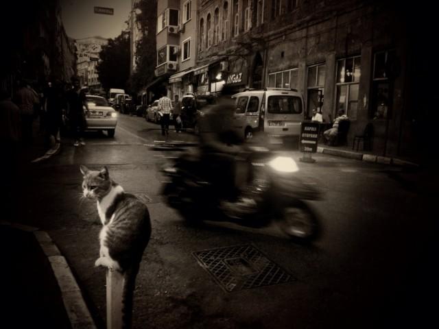 Стамбул, август 2012