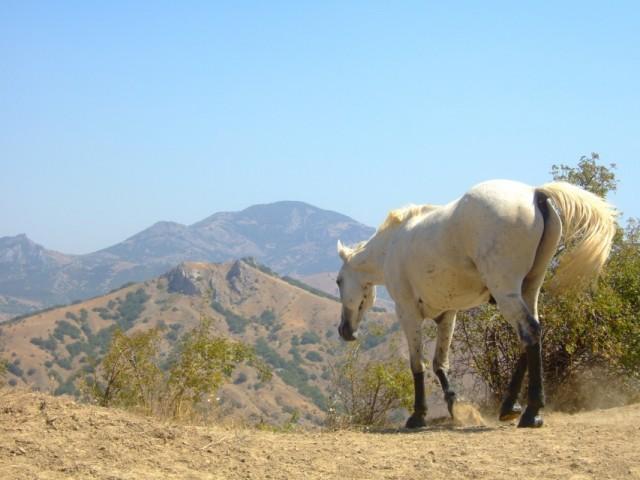 Паслась лошадка белая..