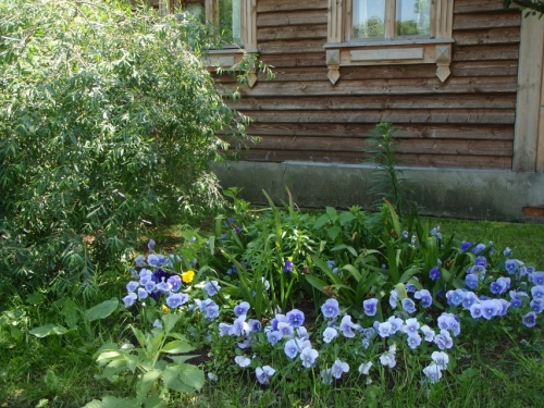 цветник у избушки пасечника