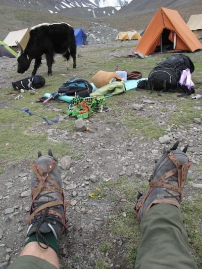 Ботинки, кошки и як размером с палатку
