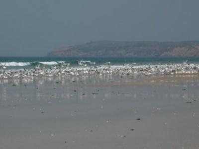 чайкин пляж