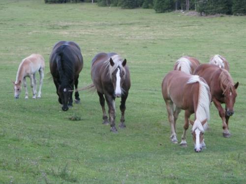Свободно гуляющие лошадки )))