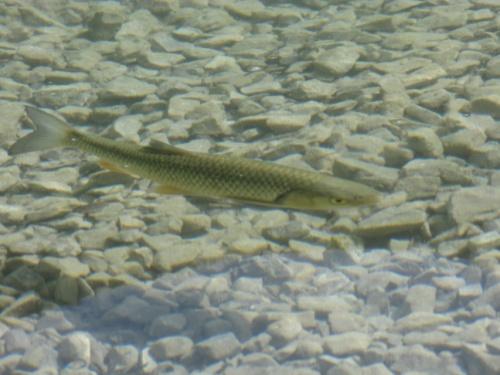 Рыба в озере )))