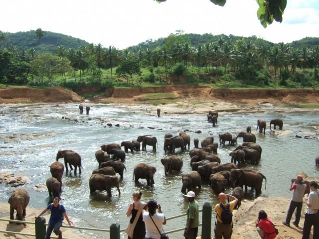 Слоновий питомник-обязательно детям показать!