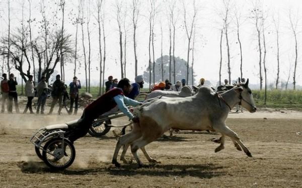 На фестивале в Кила Раипуре, Пенджаб