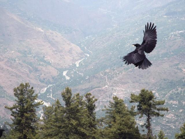 Вид на долину Парвати