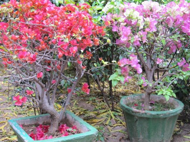 там имеется и бонсай-сад