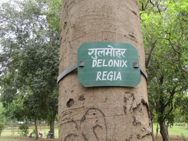 многие деревья имеют табличку с ботаническим названием-  в саду заметили много лекарственных растений, известных в аюрведе