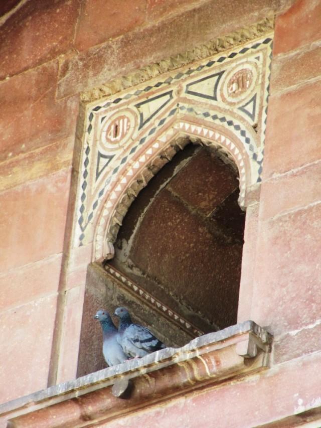 голуби над входом в мечеть