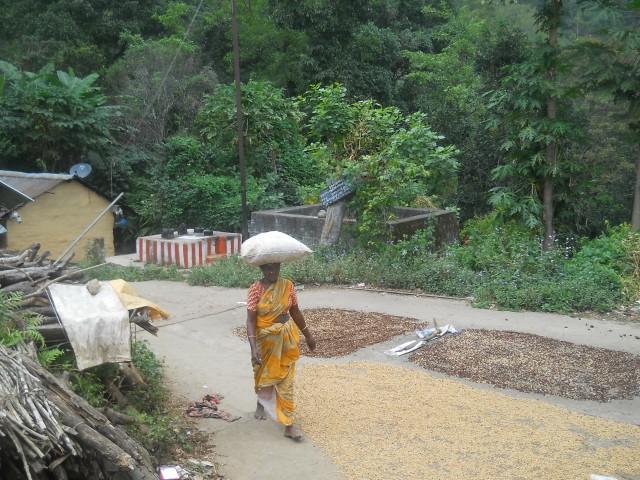 сушат кофе в деревушке