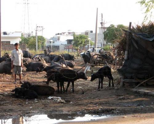А это коровки, ну как же без них :)