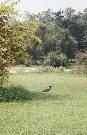 А еще здесь много разных птичек и белочек.