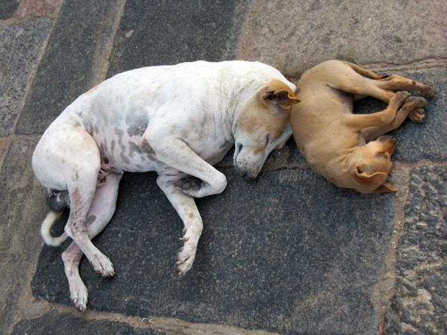 Собаки в храме